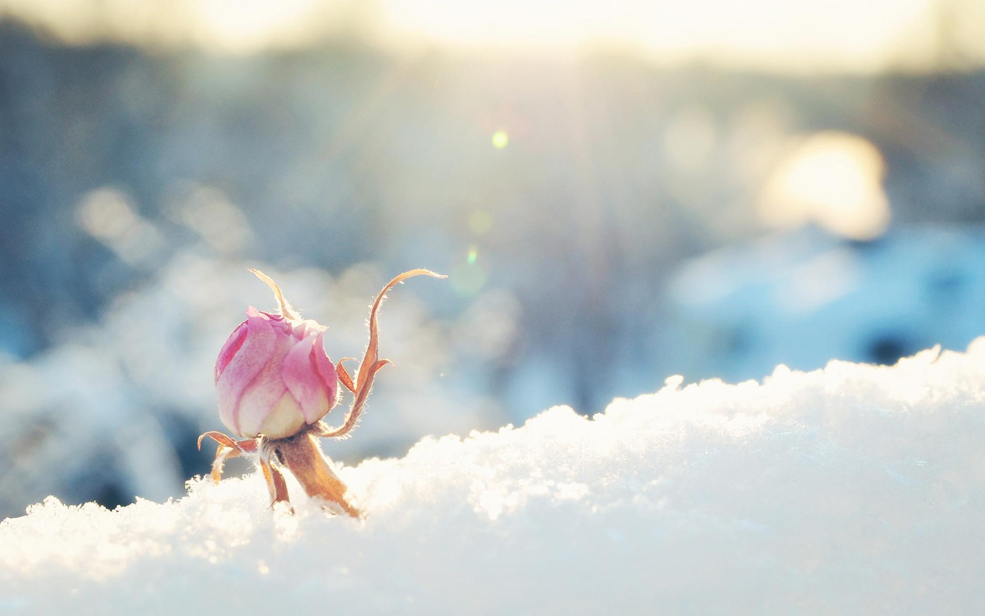bud in winter